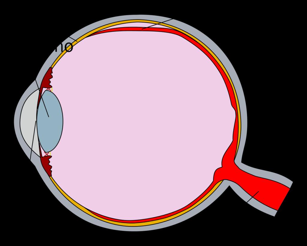 Las partes del ojo para niños de primaria 2