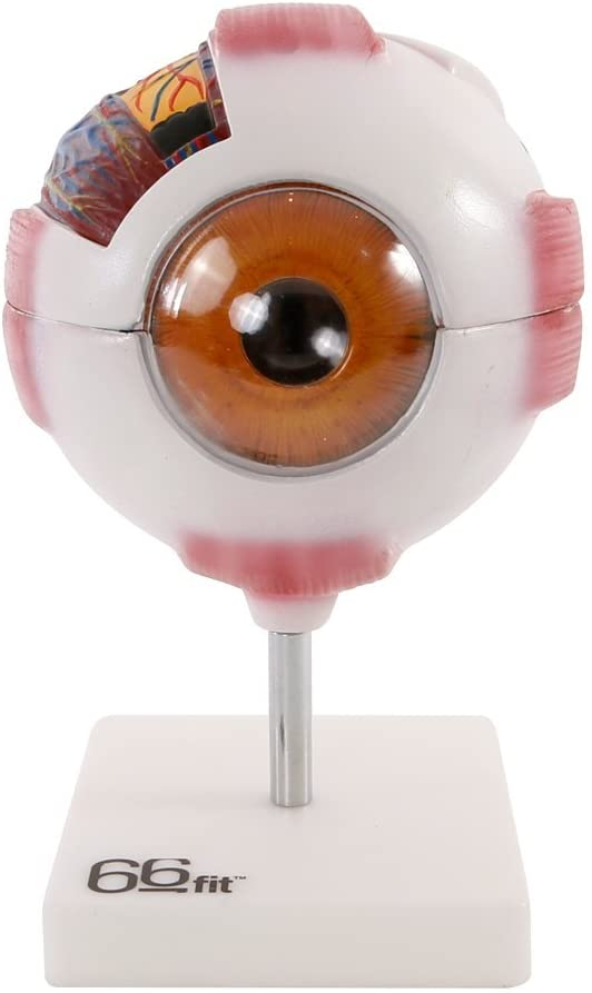 Anatomía de las partes del ojo humano 3