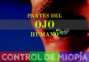 Banner - Partes del ojo Humano