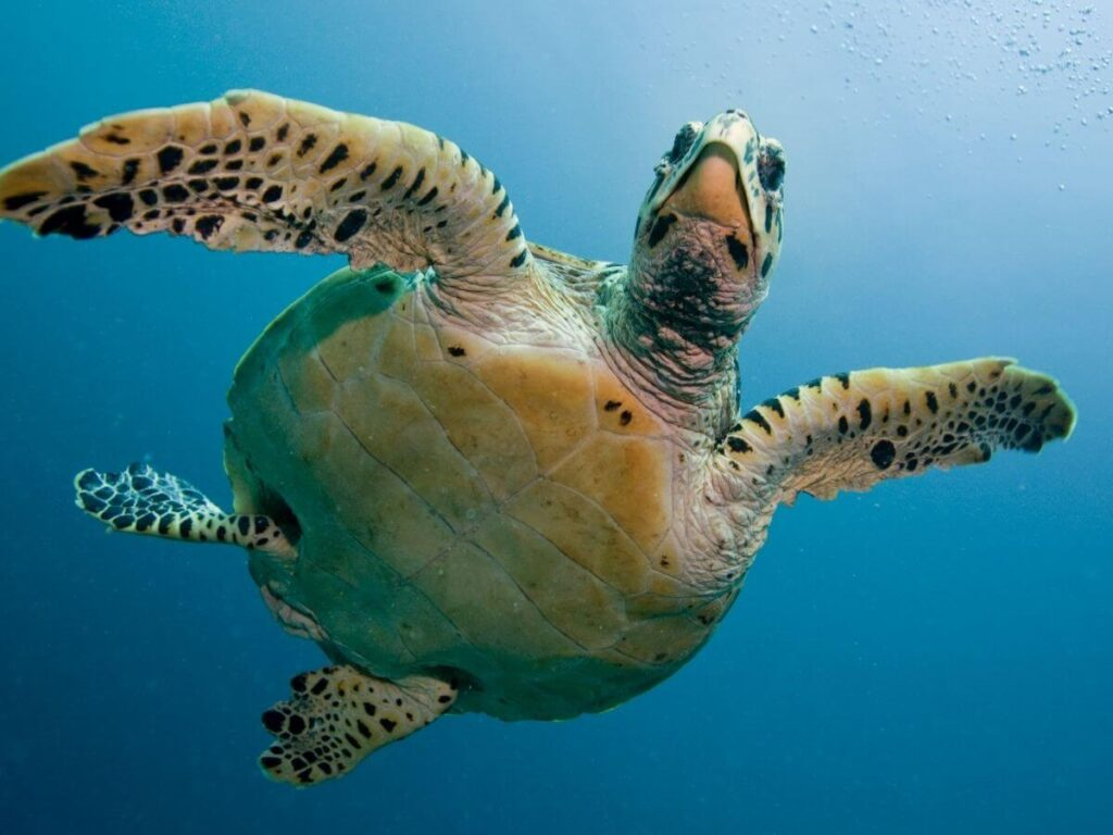 Detener y ralentizar la miopía requiere planificación y diseño, para gozar de una calidad de vida digna de las tortugas marinas.