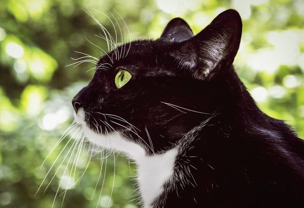 El ojo de un gato también puede tener astigmatismo alto