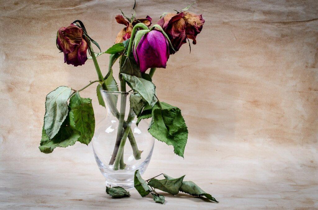 Sin una buena fórmula, el systane sin conservantes estaría en los mismos problemas que estas flores al cabo de un mes.