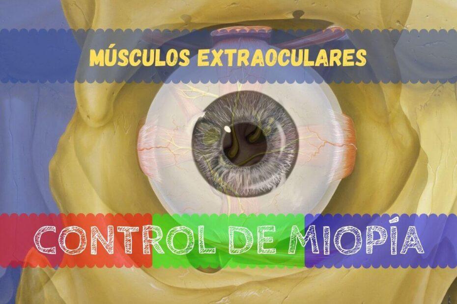 Banner - Músculos extraoculares