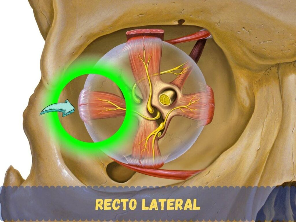 Recto lateral